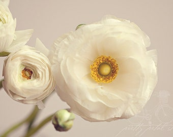 Fine Art Photograph, White Ranunculus Flowers, Ranunculus Art, Cream, Yellow, Macro Art, Flower Photo, Bloom, Petals, Home Decor, 8x12 Print