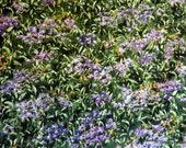 "One Yard Cut Quilt Fabric, Large Field of Purple Flowers ""Wild in The Wilderness"" by Katherine Gardner for Riverwoods, Supplies"