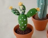 Yellow Flower Cactus