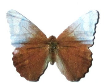 24 White, Faded Blue & Rustic Brown Paper Butterfly Embellishments for diy weddings, butterfly baby showers, diy school kit, cupcake toppers