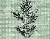Digital Download English Lavender image Antique Illustration  digi stamp, digital stamp, Elegant, beautiful, Digital Transfer