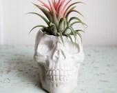 Skull Planter, concrete plant pot, Garden Home Decor