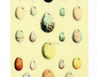 Chart of French Eggs Print Instant Digital Download