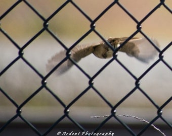 Escape Brown Bird Flying away from a black chain link fence Nature Photography Bird Art in flight Art Photography for your Empty Walls