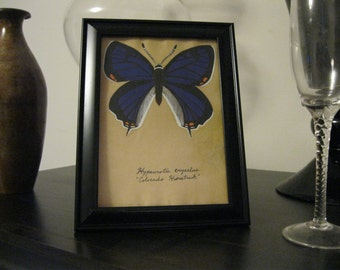 Purple Butterfly Painting - Colorado Hairstreak on Tea stained paper