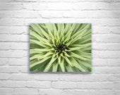 Green Agave Art, Botanical Art, Southwest Cactus Nature Photography, Abstract Nature, Desert Art, Organic Art, Arizona, Cochise County