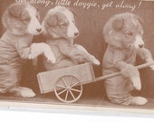Dog postcard - Get along, little doggie, get along, dressed dogs Real photo Vintage Dog Postcard, RPPC