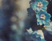 Delphinium Flower Photography - Botanical Print, Floral Print, Blue Flowers, Dark Floral Print, Nature Decor, Garden Home Decor