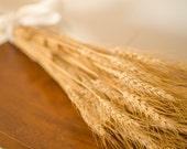 Dried Bearded Wheat Bundle, dried wheat, golden wheat, wheat bunch, wheat bundle, dried grains, green wheat, green grains