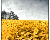 Color photography, Sunflower Decor, Landscape Photo, Wall Decor, Wall Hanging, Wall art, Art For Bathroom