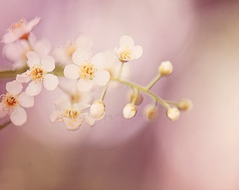 spring nature photography / flower, white, pink, blossom, crabapple, pastel, feminine, girly / come to life / 8x10 fine art photo