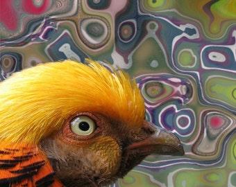 Golden Pheasant, Bird Art, Abstract Digital Fantasy, Woodland Animal, Green Pink Yellow,  Nursery Child's Room Decor, Giclee Print, 8 x 8