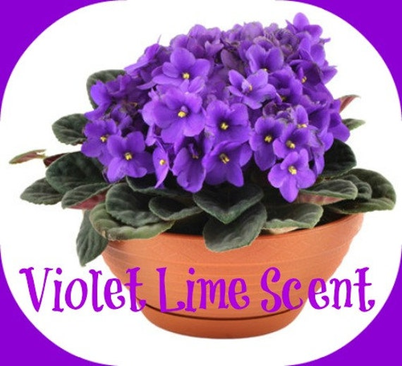 VIOLET LIME Scented Melts - Soy Wax Melts - Soy Tarts - Floral Scent - Citrus Scent - Wickless Candle - Highly Scented - Handmade In USA