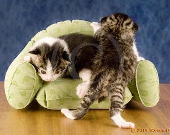 Cute Kittens, on miniature sofa, Cats Cuddling, 8x10 Cat Art, Cat Print
