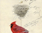 Northern Cardinal Nest and Egg Group on French Document print 5x7