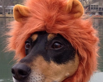 Lion Mane for dogs and cats