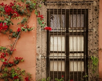 Bougainvillea Photo Mexico Photograph San Miguel de Allende Flower Photography Neutral Colors Beige Brown lat1