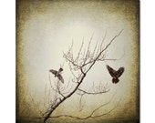 Territorial Flight, fine art photography ,bird photography Wall art, nature decor, sepia tone