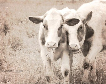Frolicsome - 8X12 Fine Art Photograph - sepia - home design - nursery wall art - cow photography - rural - farmhouse chic - rustic decor