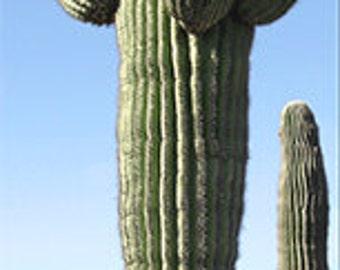 Arizona Cactus Bookmark