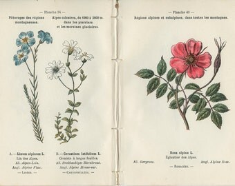 1898, Alpine Alchemil, Sandwort, Carpathian, Mouse-Ear, Flax, French Botanical Book Plate, 33, 50, 34, 49, Henry Correvon