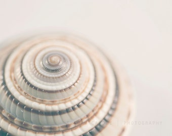 Seashell Photography / beach art prints / shabby chic wall decor  / white wall art / neutral grey / cottage home decor / ocean /  sea shells
