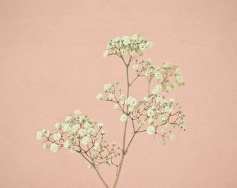 SALE 25% OFF Baby's Breath - Flower photography, baby's breath, gypsophila, nature art, pastel colours, pink and white, spring decor