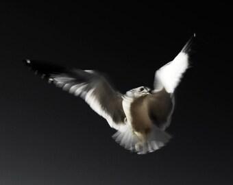 Seagull, Bird Photography, Abstract Photography, Limited Edition Art Print, Fine Art Photography Print, Animal Photography, Gaimes