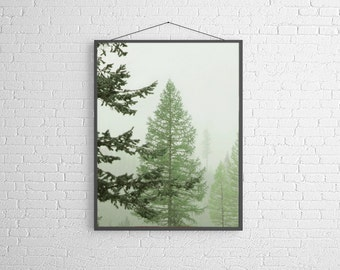 Nature Photography Nature Landscape Spring Forest Landscape Photograph of  Tamarack Trees in the Mist