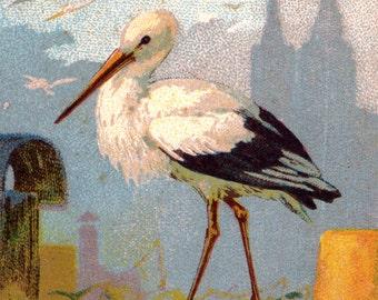 Stork cigogne vintage French illustration digital image Instant Download 155