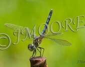 Blue Dragonfly Photo Magnet