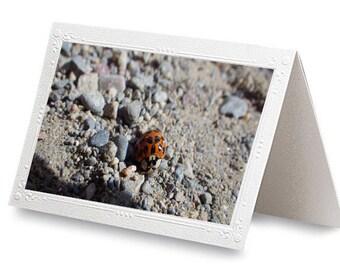 204 Lady Bug