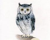 Owl 8 x 10 Print by SBMathieu