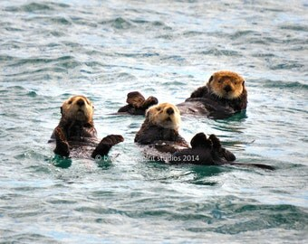 Sea Otters, Wildlife, Alaska, Nature Photo