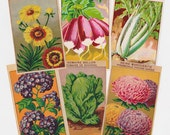 144 Vintage French Flower and Vegetable Seed Packet Labels lithographs antique botanical prints from the 1920s all different