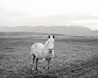 Black and White Photography, White Horse Photograph, Western Horse Art