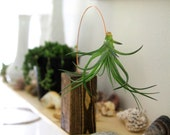 Out on a Line Air Plant Holder // Wood Block and Copper Wire // Unique Decor