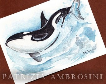 Killerwhale -- ACEO PRINT open edition - animal collectible card