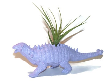 Dinosaur planter with  air plant. Lily the lavender pinacosaurus dinosaur.