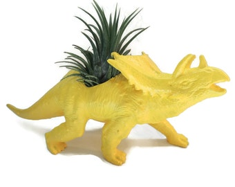 Dinosaur planter with easy care air plant. No soil needed.