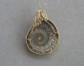 Ammonite Pendant Wrapped in 14K Gold-Filled Wire