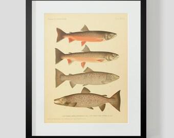 Trout Salmon Fish Print Plate 37