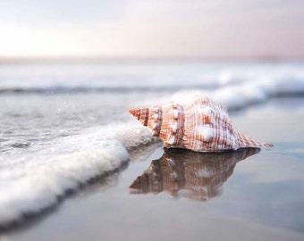 Seashell Photography, Beach Decor, Ocean Sea, Blue White Nautical Decor, Beach Photography, Seashell Wall Art