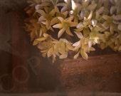 Antique Rustic Shabby Chic Flowers Wall Decor Fine Art Photography 4x6, 5x7, 8x10