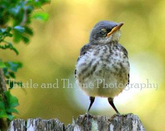 Bird Photographic Art Print - 5x7 Photograph