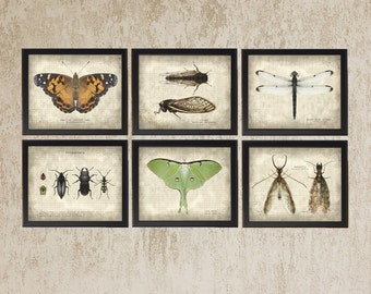 Entomology Prints - Set of 6 Six Vintage Style Original Photo Illustration - Nature Specimen Texture Science Insect Wall Art Instant Decor