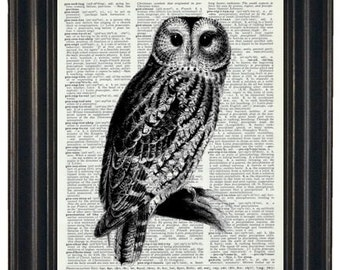BOGO SALE OWL Art Print Vintage Dictionary Art Dictionary Art Print Upcycled Art Book Print Owl on Vintage Dictionary Book Page 8 x 10