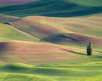 Serene (Steptoe Butte, The Palouse, Washington)