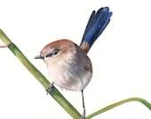 Wren Painting  bird art - Print of Wren painting  A4 print wall art print - bird art print