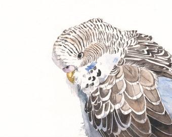Budgerigar Parakeet Watercolor Painting - print of watercolor painting A4 print wall art print - bird art print